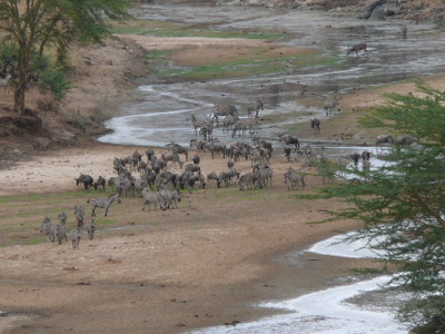 Parque Nacional de Serengeti Tarangire